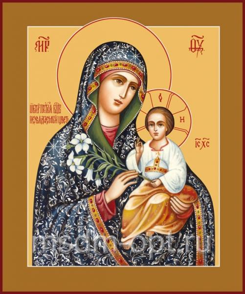 Неувядаемый Цвет икона Божией Матери (арт.285)